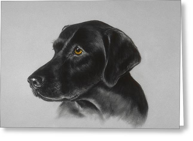 Black Labrador Greeting Card by Patricia Ivy