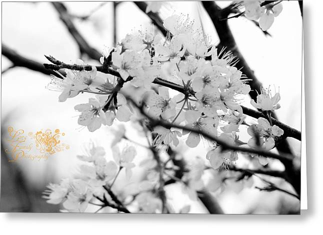 Arkansas Greeting Cards - Blooming Greeting Card by Amy Long
