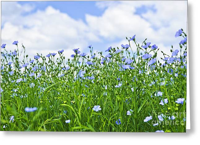 Flowering Greeting Cards - Blooming flax field Greeting Card by Elena Elisseeva