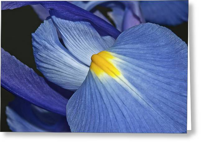 Goddess Of Love Greeting Cards - Blue Iris Greeting Card by Carolyn Marshall
