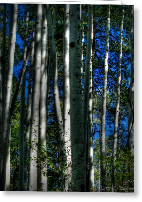 Prescott Greeting Cards - Blue Skies Through the Aspens Greeting Card by Aaron Burrows