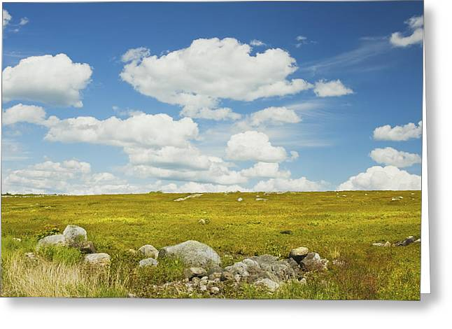Blueberry Barrens Greeting Cards - Blue Sky And Clouds Over Blueberry Farm Field Maine Greeting Card by Keith Webber Jr