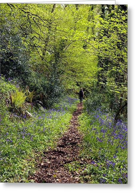 Human Tree Greeting Cards - Bluebell Wood Greeting Card by Dr Keith Wheeler