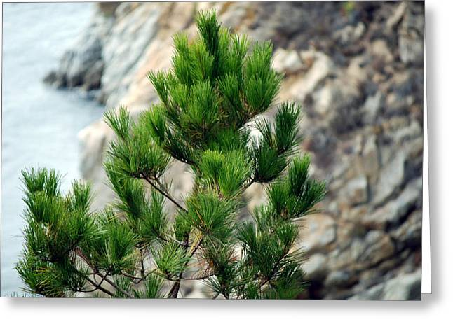 Point Lobos Greeting Cards - Bokeh of Evergreen  Greeting Card by Harvey Barrison