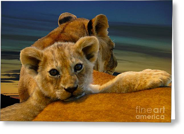 Canadian Photographer Greeting Cards - Born Free Greeting Card by Al Bourassa