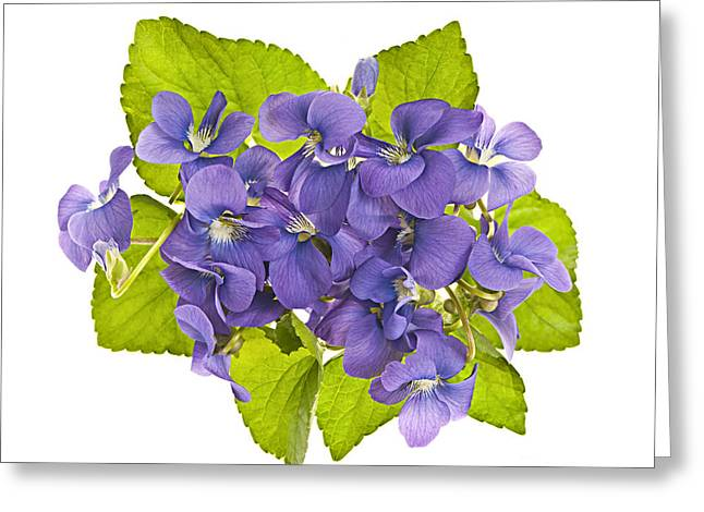 Floral Arrangement Greeting Cards - Bouquet of violets Greeting Card by Elena Elisseeva
