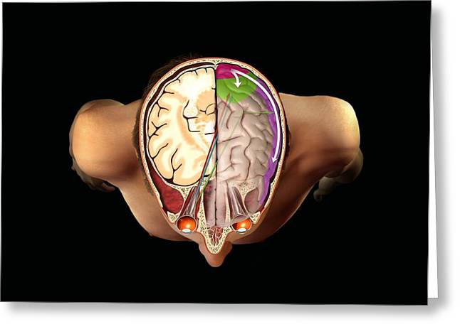Brain And Vision, Artwork Greeting Card by Henning Dalhoff