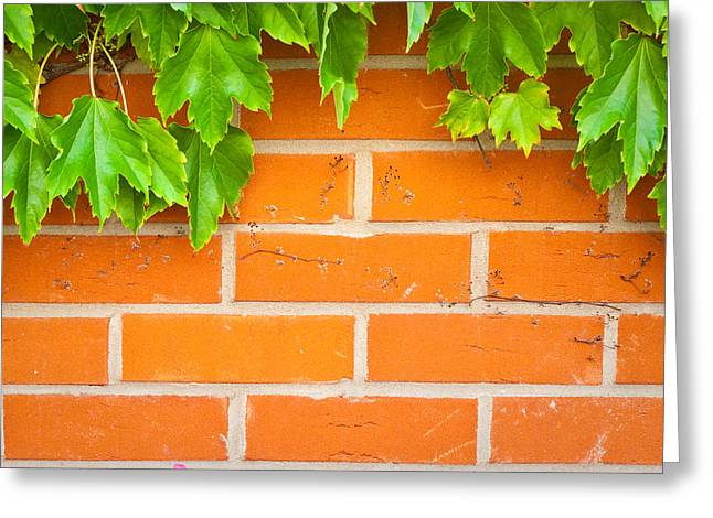 Vine Leaves Greeting Cards - Brick wall Greeting Card by Tom Gowanlock