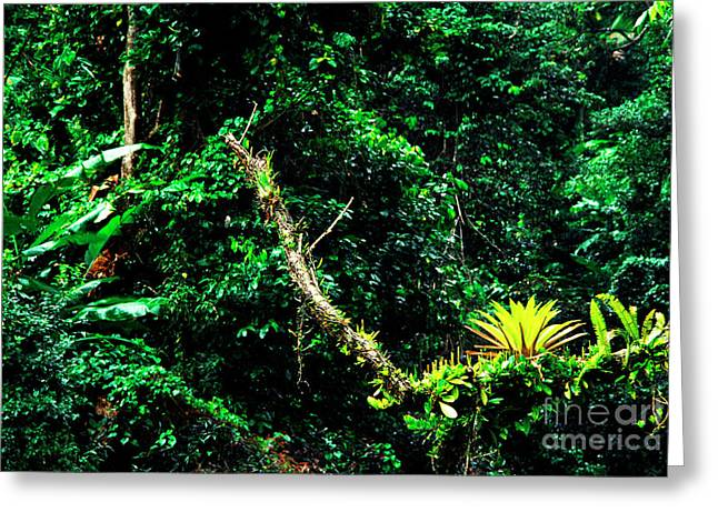 Epiphytic Bromeliads Greeting Cards - Bromeliads El Yunque National Forest Greeting Card by Thomas R Fletcher