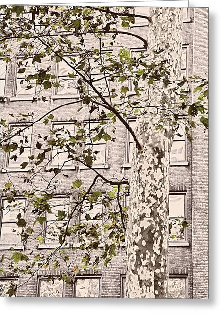 Bryant Greeting Cards - Bryant Park Greeting Card by JAMART Photography
