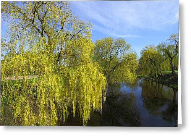 Rand Park Greeting Cards - Bug River in Belarus Greeting Card by Igors Parhomciks