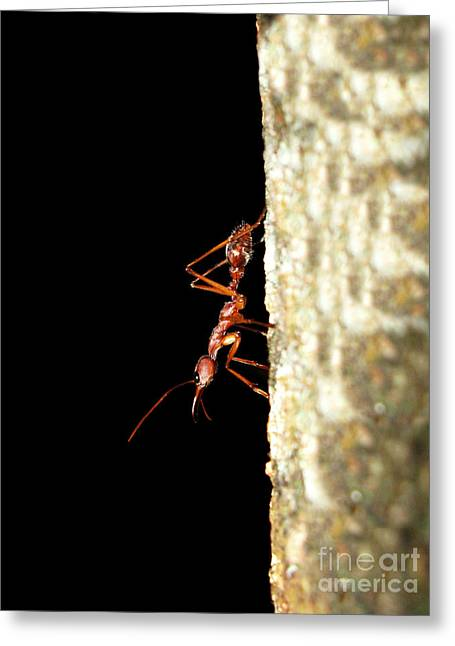 Social Organizations Greeting Cards - Bull Ant Greeting Card by Johan Larson