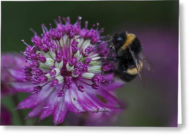 Beeswax Greeting Cards - Busy Worker Greeting Card by Zoe Ferrie