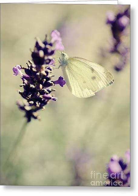 Butterfly On Lavender Greeting Cards - Butterfly.. Greeting Card by LHJB Photography