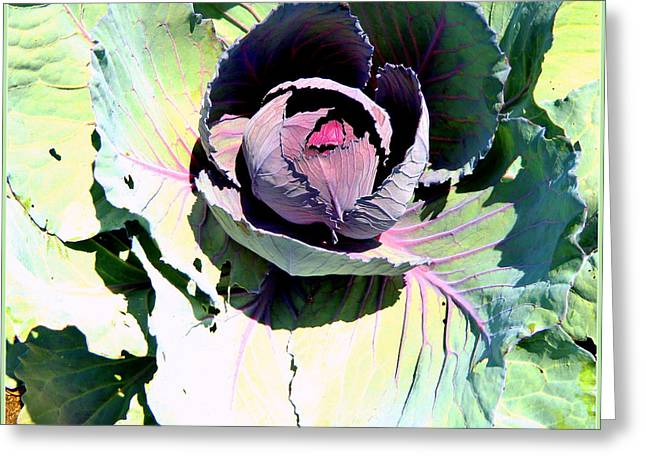 Lettuce Digital Greeting Cards - Cabbage  Greeting Card by Mindy Newman