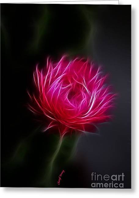 Pink Flower Prints Greeting Cards - Cactus Flower Greeting Card by Cheryl Young