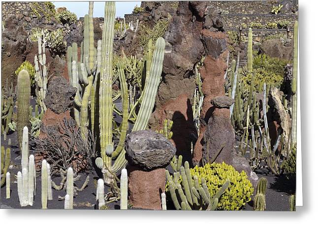 Cactus Garden, Lanzarote Greeting Card by Tony Craddock