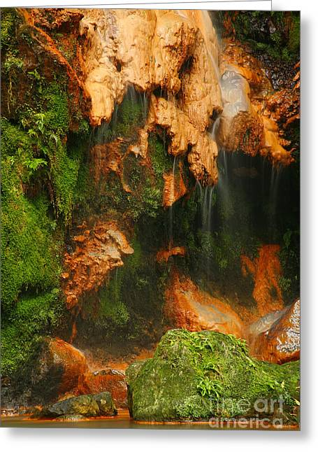 Azores Greeting Cards - Caldeira Velha park Greeting Card by Gaspar Avila