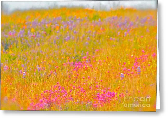 Mccrea Greeting Cards - California Wildflowers No. 1 Greeting Card by Gus McCrea