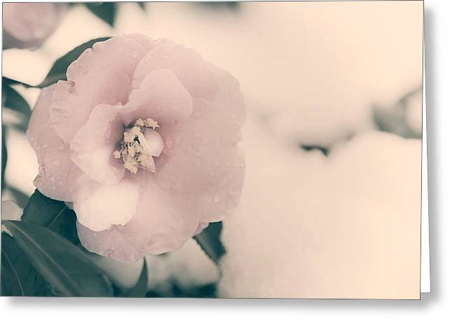 Wet Petals Greeting Cards - Camellia Greeting Card by Joana Kruse
