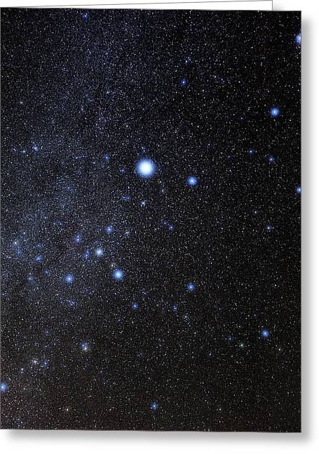 Sirius Greeting Cards - Canis Major Constellation Greeting Card by Eckhard Slawik