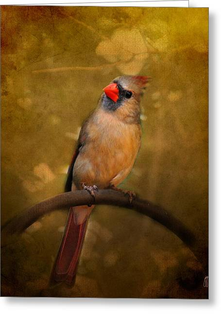 Cardinal Photo Greeting Cards - Cardinal II Greeting Card by Jai Johnson