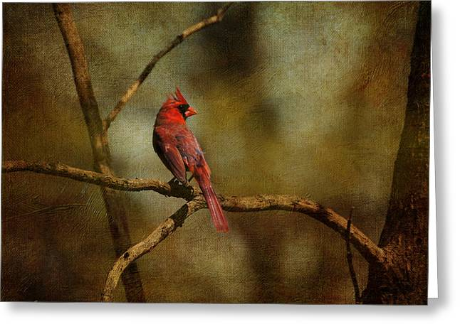 Cardinal Photo Greeting Cards - Cardinal III Greeting Card by Jai Johnson