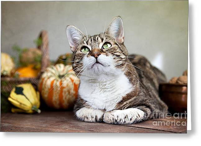 Whiskers Greeting Cards - Cat and Pumpkins Greeting Card by Nailia Schwarz
