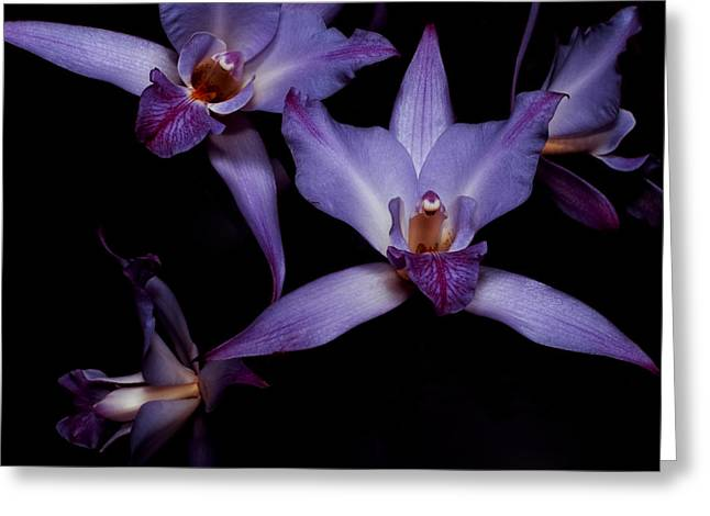 Cattleya Greeting Cards - Cattleya Orchids Greeting Card by Cynthia Dickinson