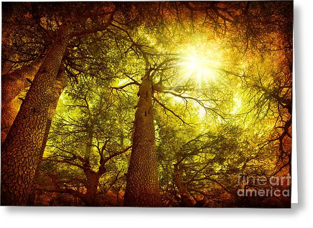 Rare Sunset Greeting Cards - Cedar tree forest Greeting Card by Anna Omelchenko