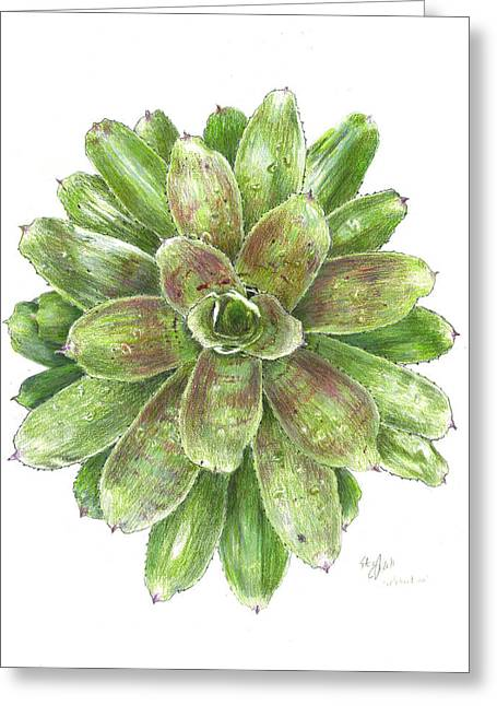 Bromeliad Drawings Greeting Cards - Celebration Greeting Card by Steve Asbell