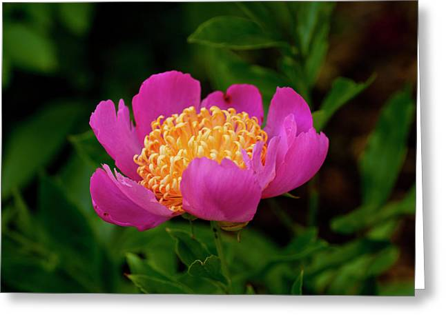 Center of Attention  Greeting Card by Don  Wright