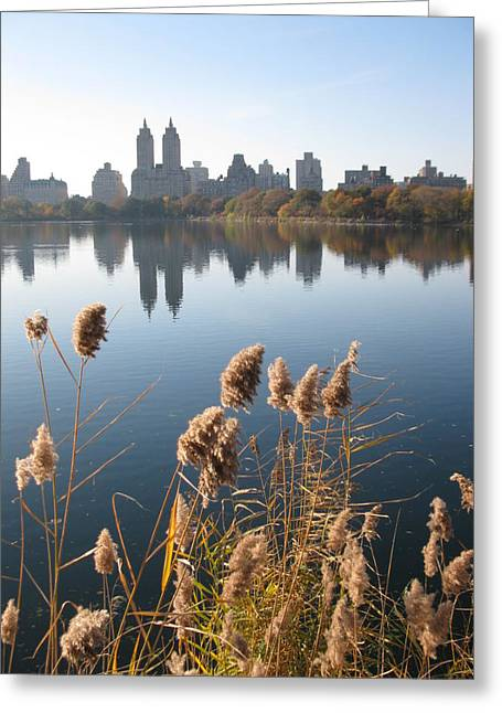 Central Greeting Cards - Central Park Greeting Card by Yannick Guerin