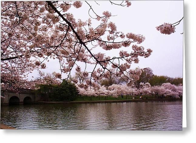 Cherry Blossom Festival Greeting Cards - Cherry Blossom Bridge Greeting Card by Joyce Kimble Smith