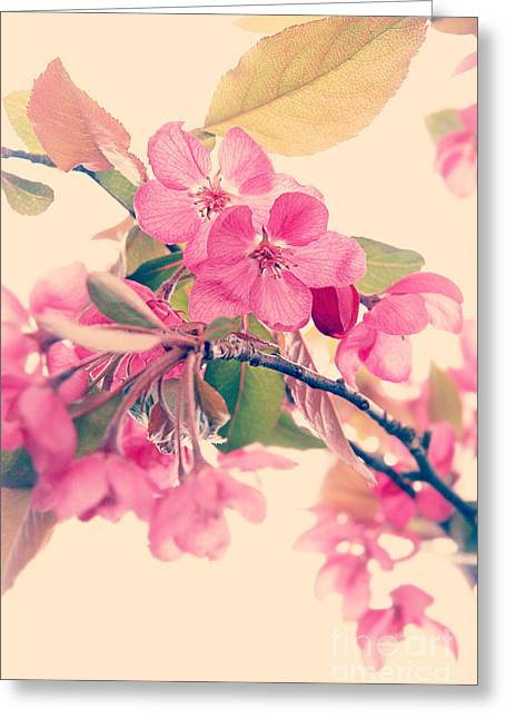 Fuschia Greeting Cards - Cherry Blossoms Greeting Card by HD Connelly