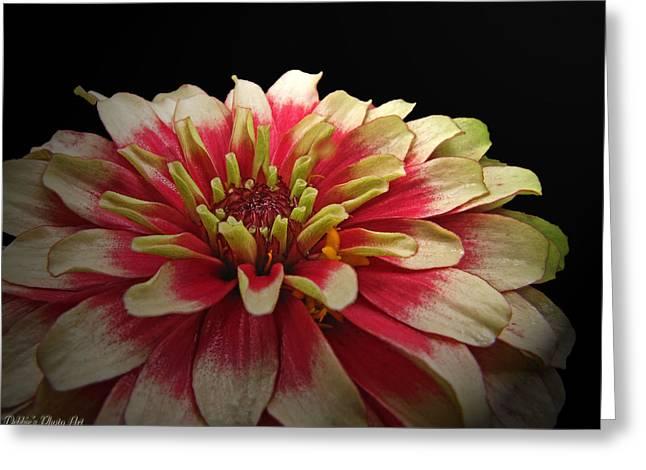 Zinna Greeting Cards - Cherry Vanilla Greeting Card by Debbie Portwood