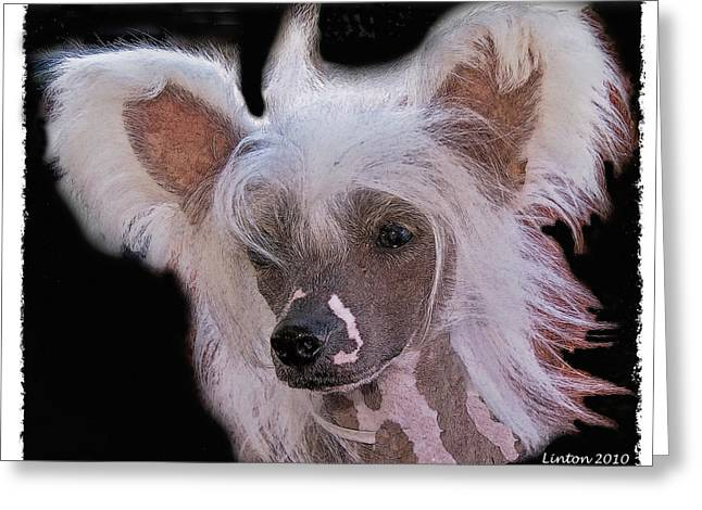 Purebred Digital Art Greeting Cards - Chinese Crested Greeting Card by Larry Linton