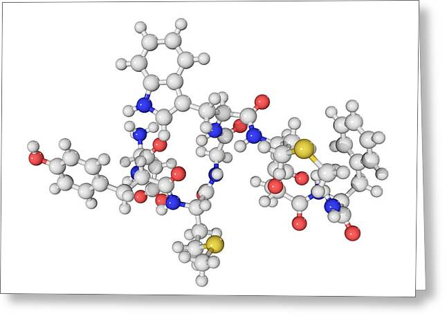 Chemical Compound Greeting Cards - Cholecystokinin-8 Molecule Greeting Card by Laguna Design