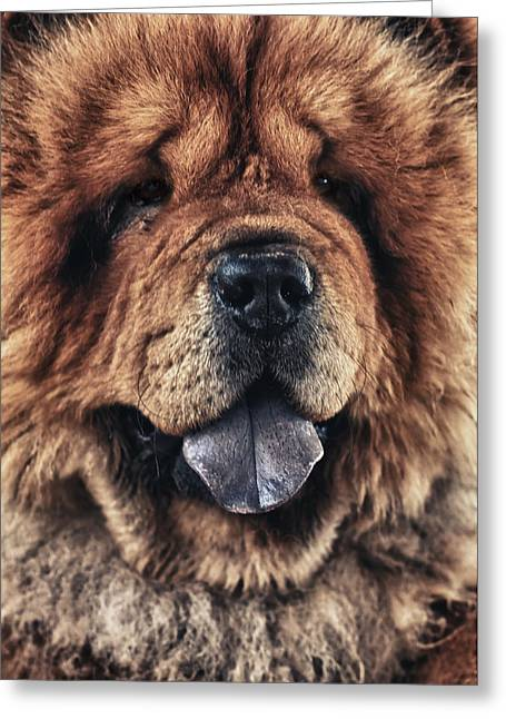 Happy Dogs Cute Dogs Greeting Cards - Chow Chow  Greeting Card by Stylianos Kleanthous