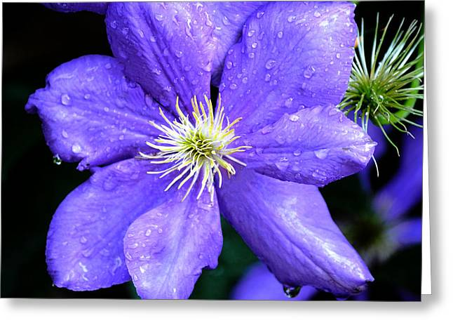 Trellis Greeting Cards - Climbing Clematis Greeting Card by Julie Palencia
