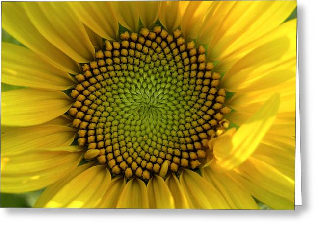 Patterns In Nature Greeting Cards - Closeup Of A Sunflower At The Sunflower Greeting Card by Amy White & Al Petteway