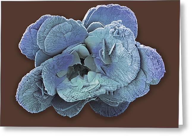 Coccolith Greeting Cards - Coccoliths, Sem Greeting Card by Steve Gschmeissner