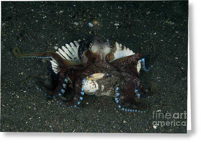 Cephalopod Greeting Cards - Coconut Octopus In Shell, North Greeting Card by Mathieu Meur