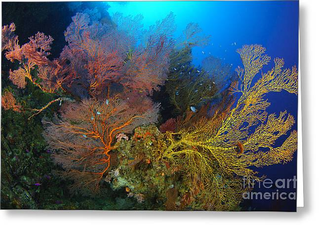 Undersea Photography Greeting Cards - Colorful Assorted Sea Fans And Soft Greeting Card by Steve Jones
