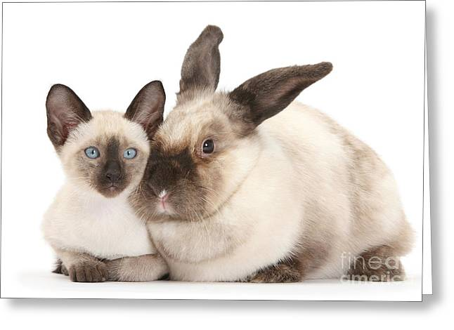 House Pet Greeting Cards - Colorpoint Rabbit And Siamese Kitten Greeting Card by Mark Taylor