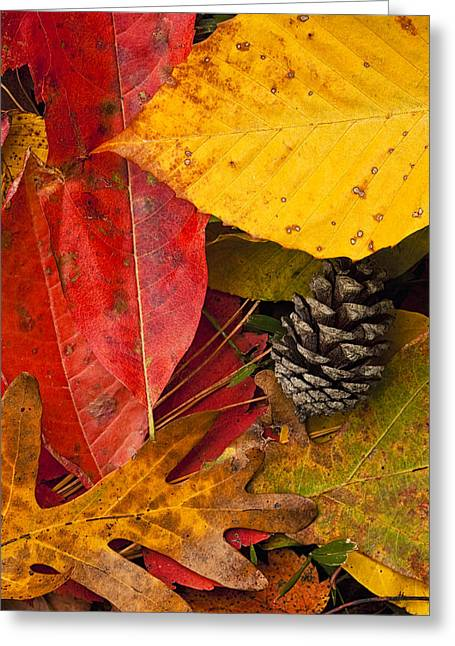 Pine Cones Photographs Greeting Cards - Colors of Autumn Greeting Card by Andrew Soundarajan