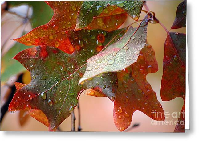 Colors Of Fall Greeting Cards - Colours of Fall II Greeting Card by Robert Meanor