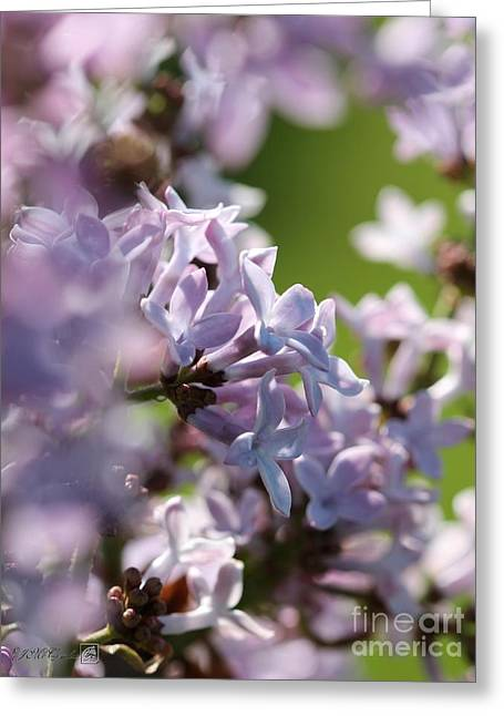 Jem Fine Arts Greeting Cards - Common Purple Lilac Greeting Card by J McCombie