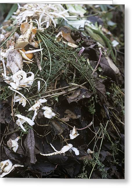 Compost Greeting Cards - Compost Heap Greeting Card by Maxine Adcock