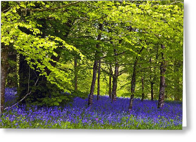 Spring Bulbs Greeting Cards - Cornwall Llanhydrock Gardens Greeting Card by Dr Keith Wheeler